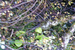 _DSF3766_DxO (Alexandre Dolique) Tags: fuji xt3 fujifilm 1855 la relatière belledonne saint martin duriage