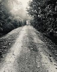 Iph8231 (gzammarchi) Tags: italia paesaggio natura pianura campagna ravenna borgomontone strada stradabianca cancello bn