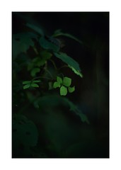 This work is 10/12 works taken on 2019/9/16 (shin ikegami) Tags: sony ilce7m2 a7ii sonycamera 50mm lomography lomoartlens newjupiter3 tokyo 単焦点 iso800 ndfilter light shadow 自然 nature naturephotography 玉ボケ bokeh depthoffield art artphotography japan earth asia portrait portraitphotography