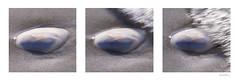 The Wave (Triptych) (Monika Müthing) Tags: balticsea light wave water shell sand beach shore ocean sea white