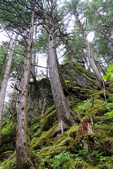 Tongass National Forest (oxfordblues84) Tags: liverwort moss treetrunks treetrunk forestfloor sky naturehike juneau alaska juneaualaska tongassnationalforest royalprincessshoreexcursion princesscruisesshoreexcursion mendenhallglacierguideschoicetrailhike naturewalk nationalforest vegetation flora tree trees forest glacialboulder glacialboulders eastglacierlooptrail