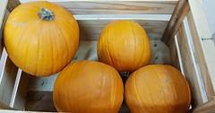 Citrouilles Halloween sur commande...