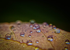 Water droplets are the best (@magda627) Tags: bokeh color nature water leaf outdoor fall flickr garden sun plant macro sony closeup droplet green tiny rain drop detail