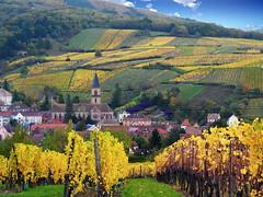 Ribeauvillé (Alsace, F) (pietro68bleu) Tags: hautrhin alsace village églisestgrégoire vignes vignoble automne