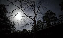 Manifestation (Keith Midson) Tags: moon clouds cloud sky night evening tree trees tasmania sigma 24mm art f14