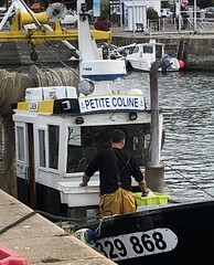 Still at Work (Melinda * Young) Tags: boat fishing tradition man work clothes fish harbor honfleur france normandy seine englishchannel deck workingboat coline lepetitecoline