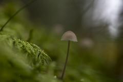 Soft mushroom (lortopalt) Tags: very mycket little liten svamp mushroom stefan lortopalt nikon d850