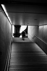 high and higher (gato-gato-gato) Tags: apsc fuji fujifilmx100f x100f autofocus flickr gatogatogato pocketcam pointandshoot wwwgatogatogatoch zürich kantonzürich schweiz black white schwarz weiss bw monochrom monochrome blanc noir streetphotography street strasse strase onthestreets streettogs streetpic streetphotographer mensch person human pedestrian fussgänger fusgänger passant switzerland suisse svizzera sviss zwitserland isviçre zuerich zurich zurigo zueri fujifilm fujix x100 x100p digital