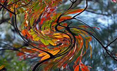 abstract autumn swirl (scott1346) Tags: leaves colors red orange yellow b beauty blue sky bokeh limbs branches tree autumn autofocus canont3i 1001nightsthenew 1001nightsmagiccity contactgroups artistic