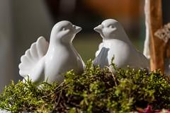Wedding - Birds - 0133 (Peter Goll thx for +13.000.000 views) Tags: lauberberg antoniuskapelle birds vögel 2019 hochzeit porzellan höchstadtadaisch bayern deutschland