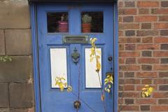 200 (Tony Tooth) Tags: nikon d7100 nikkor 50mm f18g door frontdoor yellow blue stilllife leek staffs staffordshire