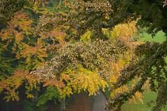 ParkTrees (Tony Tooth) Tags: nikon d7100 nikkor 55300mm trees foliage leaves autumn fall october fractal park broughpark leek staffs staffordshire