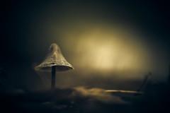 Wizard's Hat (micke.vmix) Tags: carlzeiss zeiss aposonnart2135 sonnar135f2zf d850 mushroom