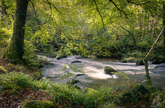 Luxulyan Valley, Cornwall, UK (David Lea Kenney) Tags: longexposure river riverscape rivers nature natural landscape landscapepics landscapeshots cornwall luxulyan uk explore travel green greenery forest tree trees wood woodland woods