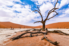 Deadvlei (Jan Jungerius) Tags: africa afrika namibia namibië deadvlei natuur nature natur boom baum tree takken äste branches zand sand duinen dünen dunes nikond750 tamronsp1530mm wolken clouds landschap landschaft landscape elitegalleryaoi bestcapturesaoi aoi