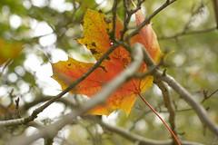 Metastable (Tony Tooth) Tags: nikon d7100 nikkor 35mm f18g leaf suspended leek staffs staffordshire