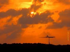 Quarta-Sunset (sonia furtado) Tags: quartasunset sunset pds contraluz pordosol cotovelo parnamirim rn ne brasil brazil soniafurtado