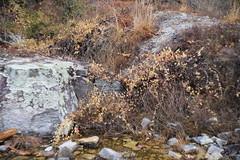 untitled (DayBreak.Images) Tags: suburban atlanta georgia dekalbcounty arabiamtn naturepreserve canondslr meyeroptic 50mm trioplan canonphotopro4