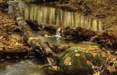 Three tiny waterfalls. (jaros 2(Ron)) Tags: creek water autumn nikond800 nikon 70200 f28 ontario canada