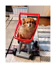 Anglų lietuvių žodynas. Žodis little dog reiškia mažai šuo lietuviškai.