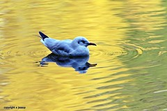 J78A0698 (M0JRA) Tags: birds water lakes views people walks clouds sky parks rufford notingham animals squirrels flying robins ducks geese abbey fields buildings trees