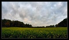 Field in autumn (mechanicalArts) Tags: feld herbst field autumn walimex samyang f28 12mm