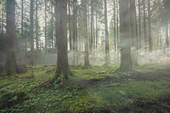 Smoke In The Forest (Click And Pray) Tags: managedbyclickandpraysflickrmanagr longexposure scotland argyll tranquility nopeople remote smoke mist fog forest ferns trees longexposurescotlandargylltranquilitynopeopleremotesmokemistfogforestfernstreesardentinny