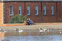 J78A0685 (M0JRA) Tags: birds water lakes views people walks clouds sky parks rufford notingham animals squirrels flying robins ducks geese abbey fields buildings trees
