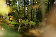 welcome to the jungle (margycrane) Tags: autumn jesień park trees drzewa liść liśćie leaves leaf light nature walking jungle sonyilce7m3 fe24105mmf4goss