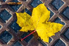 A sunny autumn day (aixcracker) Tags: autumn höst syksy october oktober lokakuu sunny solig aurinkoinen yellow gul keltainen nikond800 nikonafs200mmf4ifedmicro borgå finland porvoo suomi europe europa eurooppa