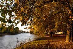Autumn colours on the river Ouse. (Darren Speak) Tags: colour trees autumn ouse river york