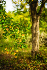 _IMG1485 (angel.doychinov) Tags: helios m42 bokeh pentax k1 nature autumn manualfocus oldlens pentaxart