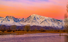 A Freezing Winters Morning In January (RS2Photography) Tags: bishop water pond sunrise sunset farmerspond owensvalley owensriver california natur nature naturephotography photography landscape canon canon80d flickr smugmug colors dawn easternsierras sierranevadas colourful colours beautiful sierranevada easternsierra eos 50mm winter trees tree morning rs2photography mount mttom mountbasin mtbasin mounttom fourteener
