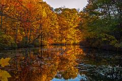Stewardship Forest_6524 (smack53) Tags: autumn autumncolors autumnseason smack53 trees fall water reflections pond scenery colorful stream fallcolors scenic foliage brook autumnal fallseason lake newjersey nikon nikond100 d100 westmilford