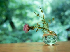 A World in a Bottle (somazeon) Tags: flower gx7 lumix panasonic
