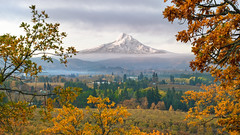 A diamond in the haze (Matthew Almon Roth) Tags: mthood mounthood hoodriver panoramapoint sunrise volcano glacier hoodrivercounty hoodrivervalley fall autumn leaves smoke burnpiles