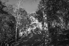 looking up, old stone lodge (Winnsborough), nestled in the trees, speckled light, near sunset, Montreat, North Carolina, Nikon D3300,  Fish-Eye-Takumar 17mm f-4, 10.23.19 (steve aimone) Tags: lookingup lodge stone nestled trees latelight nearsunset winnsborough montreat northcarolina nikond3300 blackandwhite monochrome monochromatic landscape
