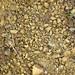 Hillsboro Sandstone (Lower Devonian; northwest of Sinking Spring, Ohio, USA) 9