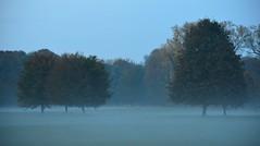 Munich - Evening Fog (cnmark) Tags: germany munich deutschland münchen bayern bavaria englischergarten englishgarden fog mist nebel tree baum autumn fall herbst blätter leaves foliage color colour ©allrightsreserved