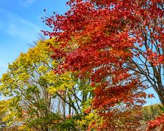 Tohoku autumn scenery (shinichiro*) Tags: 宮古市 岩手県 日本 20191021ds23927 2019 crazyshin nikonz6 z6 nikkorz2470mmf4s october autumn miyako iwate japan jp 48950310001 9501418 202001esp