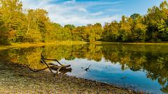 the small pond (a7m2) Tags: austria vienna prater rosenlacke hauptallee praterstern joggen hiking laufen travel danube