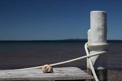 Blue, white and  seashell (soniamarmen) Tags: seaside sea shell