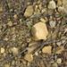 Hillsboro Sandstone (Lower Devonian; northwest of Sinking Spring, Ohio, USA) 5