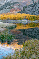 Cold Morning (Kirk Lougheed) Tags: california easternsierra inyocounty inyonationalforest northlake populustremuloides usa unitedstates alpenglow aspen lake landscape morning outdoor plant reed reflection tree water