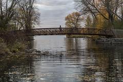 A walk in Autumn (superdavebrem77) Tags: autumn bridge tollingtonbridge beavermeadpark peterborough ontario