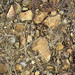 Hillsboro Sandstone (Lower Devonian; northwest of Sinking Spring, Ohio, USA) 7