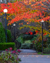 An inviting path (James_D_Images) Tags: path autumn fall leaves flowers lampposts lights foliage colourful red orange green perspective hedge branches