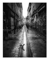 Après la pluie. (streetspirit13) Tags: bw bnwphotographer bnwdemands bnwphotography bnwstreetphoto streetpassionaward streetphotographer marseillestreet rawstreet blackandwhite noiretblanc