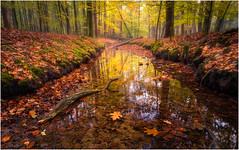 Autumn at Leuvenumse Bos (Rob Schop) Tags: autumn wideangle jackboots leuvenumsebos holland sonya6000 samyang12mmf20 f11 pola hoyafilters branch trees orton lrcc pscc