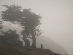 P1010388 (Cepreu K) Tags: friendlychallenges tree pacifica fog